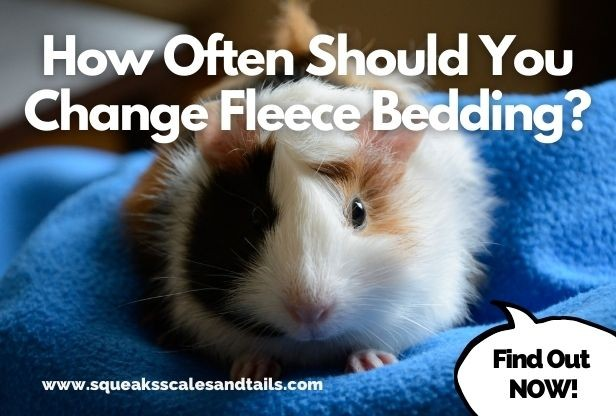 Change Fleece Bedding, Can You Use Microfiber Towels For Guinea Pig Bedding